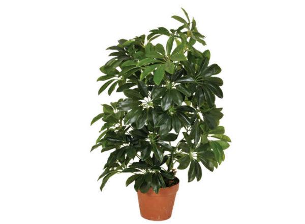 Planta artificial Cheflera de 65 cm de Catral