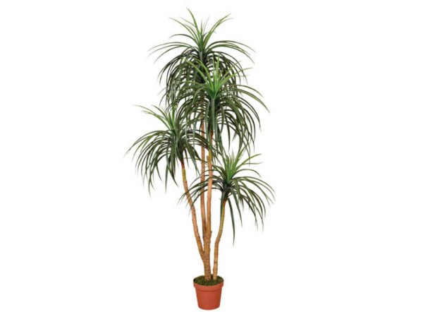 Planta artificial Nolina de 185 cm de Catral