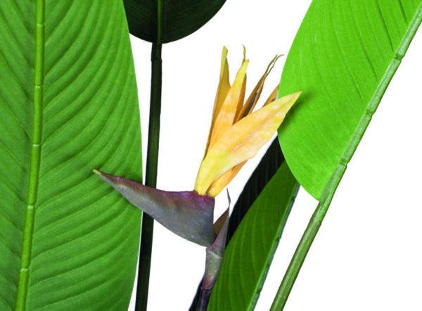 Planta artificial Ave del Paraíso con Flor de 185 cm de Catral